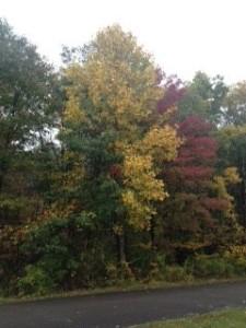 Tuxedo Foliage